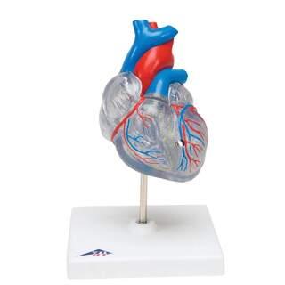 Pienennetty ja läpikuultava sydänmalli verkkokalvon järjestelmällä