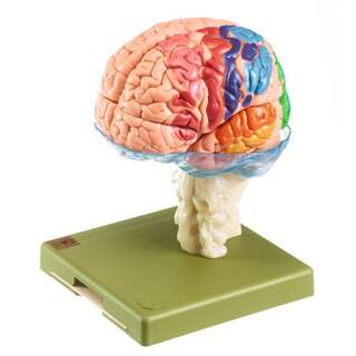 Aivomalli 15 osasta sytoarkkitehtialueilla