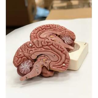 Brain malli kahdeksassa osassa