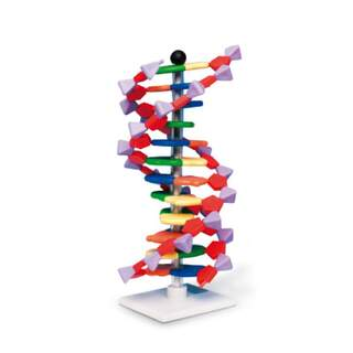 DNA malli - 12 kerrosta