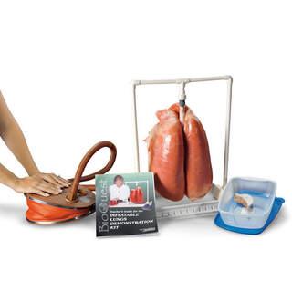 Lung esittelyn malli