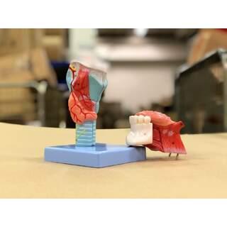 Strupe-malli kaulalla ja kielellä 5 osaa