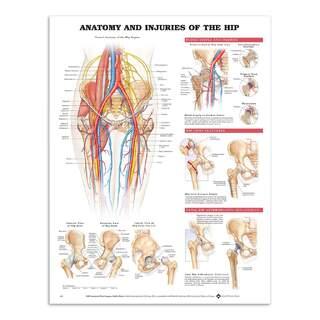 Anatomia ja vammoja lonkkanivelessä englanniksi