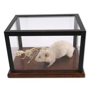 Ko Luut ja pehmustetut hiiri