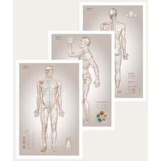 Akupunktiolevy - olennaiset kaaviot akupunktiosta