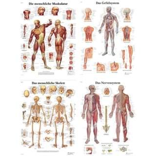 Julistepaketti - Anatomia