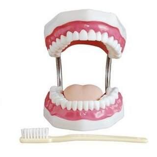 Hammashygienian hammasmalli