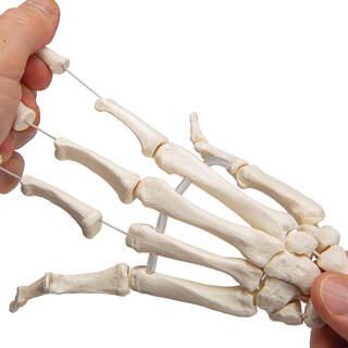 Käsirungon malli koottu elastisille ja molemmille käsivarsille