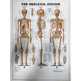 Luuranko 3D - Anatomia juliste