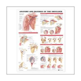 Uliste - anatomia ja loukkaantumisia olkanivelen laminoitu julis