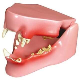 Kissa Jaw terveellisiä ja sairaiden hampaiden