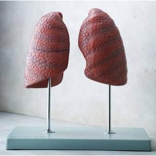 Oikea ja vasen keuhko, itsenäinen