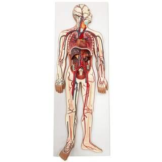 Sydän- ja verisuonijärjestelmän malli